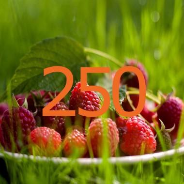 diario di una dieta - Giorno 250, Mangia senza Pancia