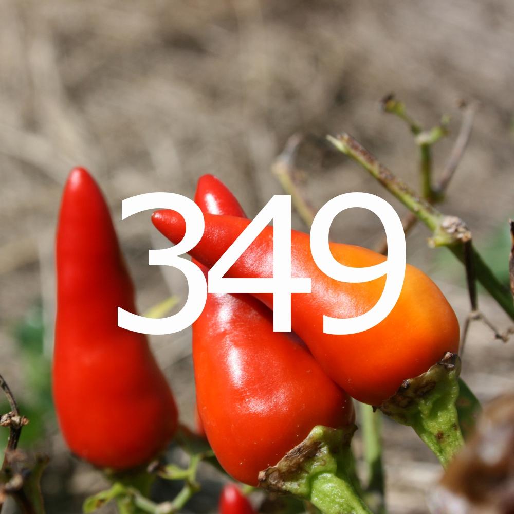 349 super chili peppers jpg