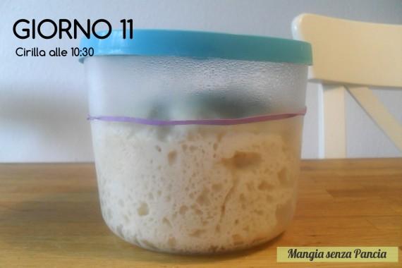 Pasta madre solida, giorno 11, diario di Cirilla, Mangia senza Pancia