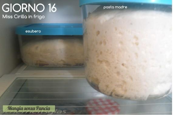 Pasta madre solida, giorno 16, diario di Cirilla, Mangia senza Pancia