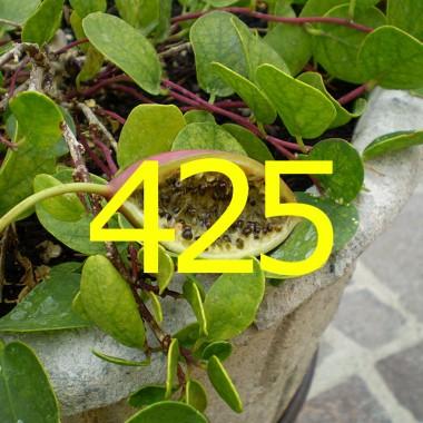 diario di una dieta - Giorno 425, Mangia senza Pancia