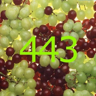 diario di una dieta - Giorno 443, Mangia senza Pancia