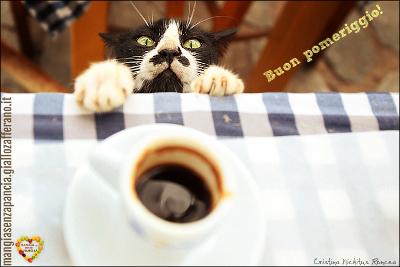buon pomeriggio, diario di una dieta - Giorno 437, Mangia senza Pancia