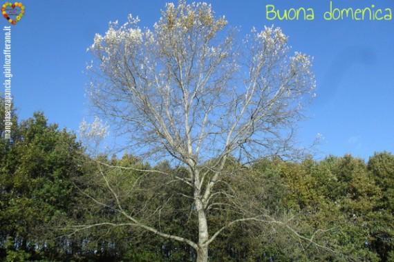 passeggiata Nimega 9 novembre 2013, quale albero è?, diario di una dieta - Giorno 455, Mangia senza Pancia