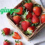 Diario della dieta mese 11, giugno 2013