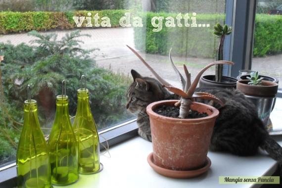 Kimbo vita da gatti, diario di una dieta - Giorno 447, Mangia senza Pancia