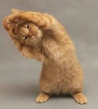 gatto in forma, Menù depurativo post abbuffata, Mangia senza Pancia