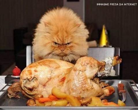 Ho sempre fame... perché?, Mangia senza Pancia