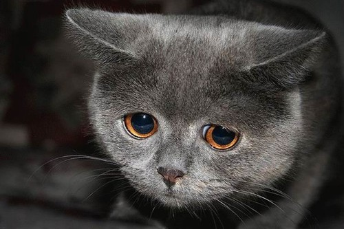 gatto triste, Menù depurativo post abbuffata, Mangia senza Pancia