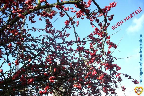 albero meline giardino davanti, buon martedì, oltre la dieta: il diario - 14 gennaio 2014, Mangia senza Pancia