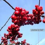 albero meline giardino davanti, oltre la dieta: il diario - 19 gennaio 2014, Mangia senza Pancia