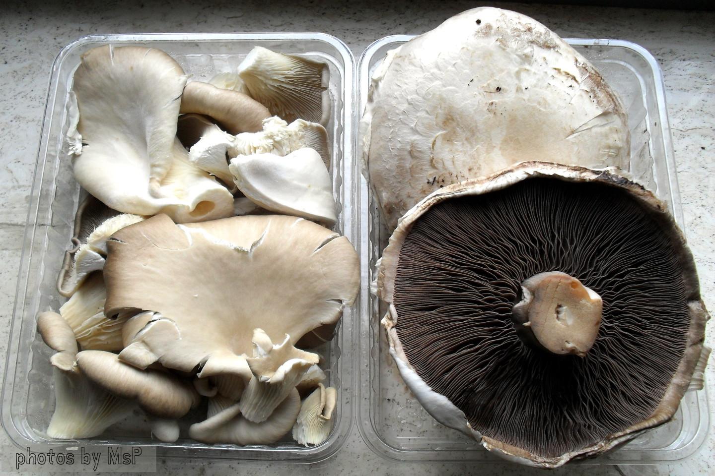 Funghi gratinati saporiti, ricetta vegetariana, Mangia senza Pancia