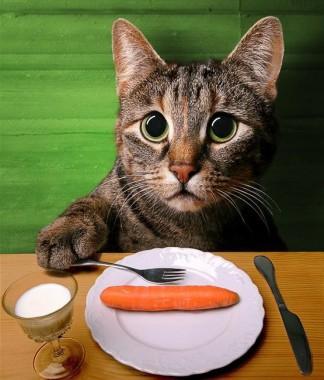 Errori nella dieta: le 10 cose da non fare, Mangia senza Pancia