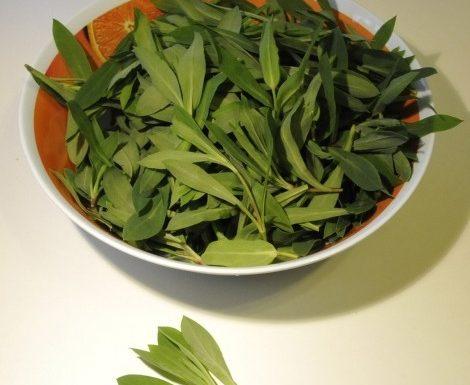 Verdure spontanee siciliane: Gli Strigoli o cannatedda…