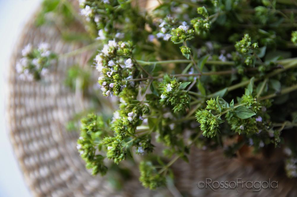 Origano - Origanum vulgare - ©RossoFragola