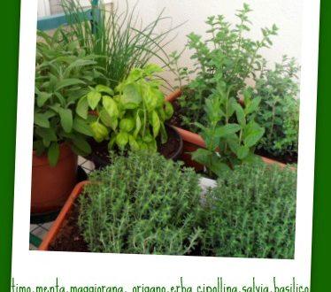 le erbe aromatiche sul mio terrazzo!!