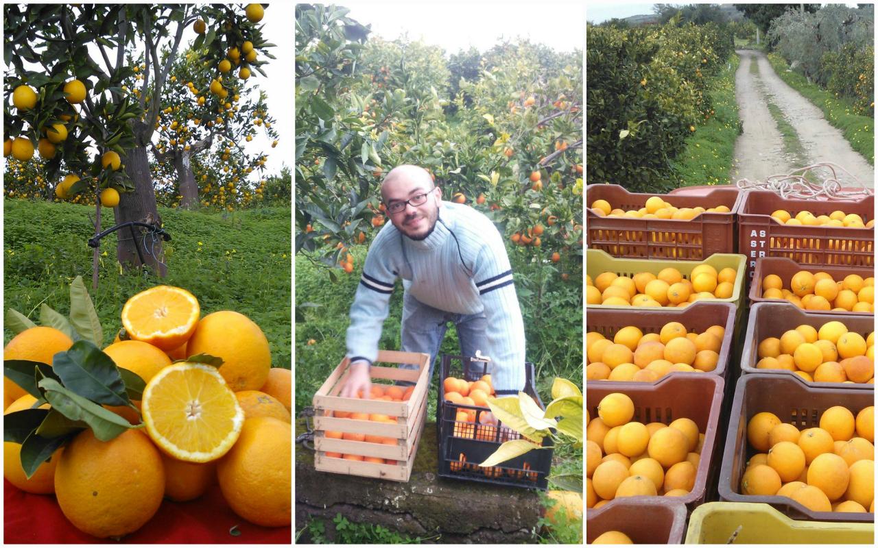 Le arance rosse di Sicilia NaturalMente Contadini
