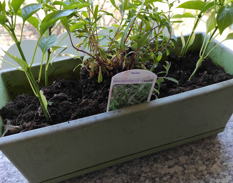 Coltivare erbe aromatiche: primavera