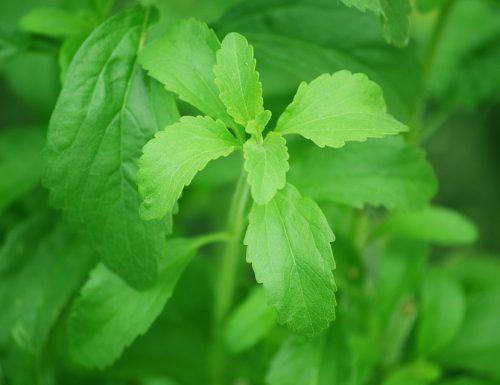 Conversione da zucchero a stevia