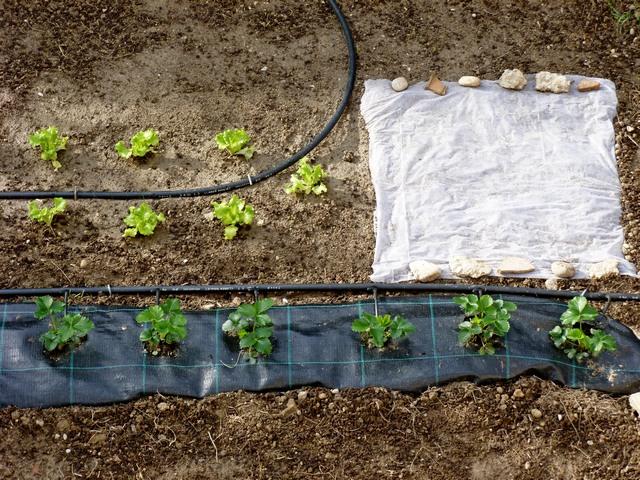 Il mio orto 2014 ortaggi che passione for Impianto irrigazione orto