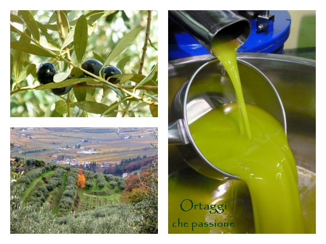 Redoro, olio extravergine di oliva