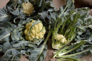 Broccolo di Bassano, ricette facili e veloci