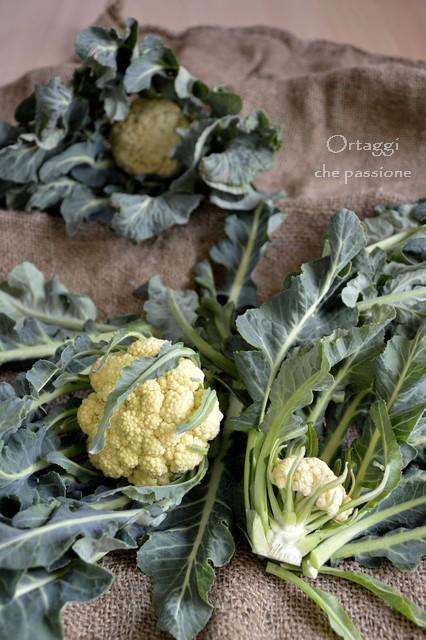 Broccolo di Bassano - ricette