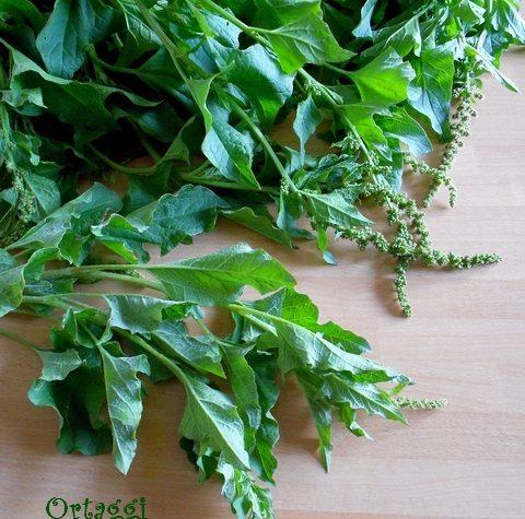 Orapi, spinaci di montagna – cottura – ricette