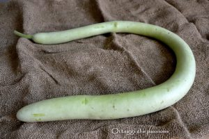 """Zucchina lunga, cucuzza longa, zucca serpente di Sicilia """"RICETTE"""""""