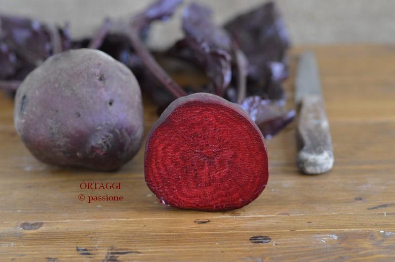Barbabietola rossa, rapa