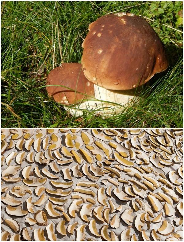 come pulire i funghi porcini e conservarli