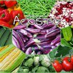 AGOSTO verdura stagione ELENCO completo