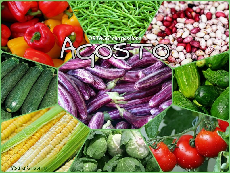 8 AGOSTO calendario verdura di stagione VERDURE del mese ORTAGGI CHE PASSIONE by Sara Grissino