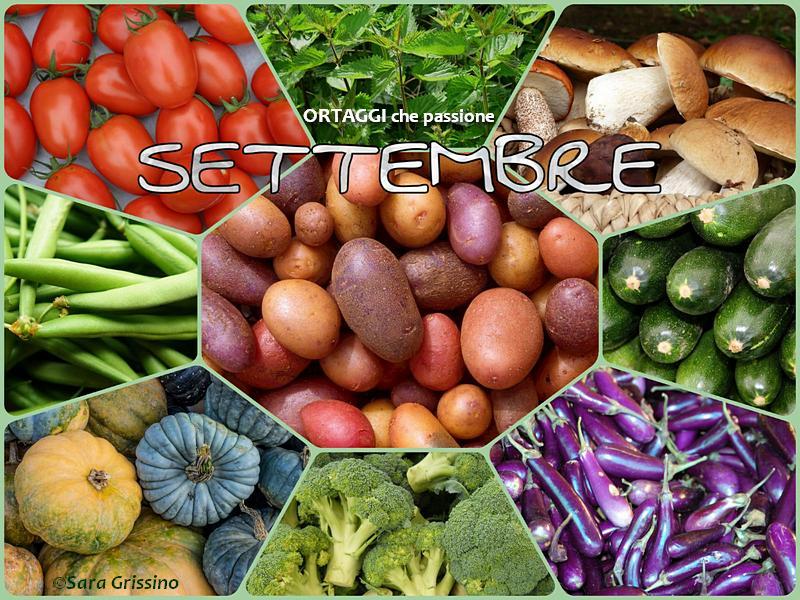 Settembre calendario verdura di stagione_ORTAGGI CHE PASSIONE by Sara Grissino
