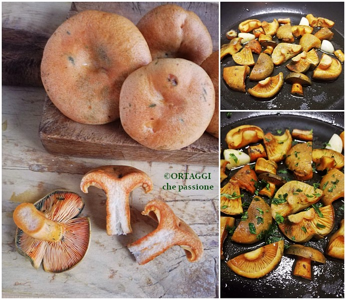Come cucinare i funghi del sangue rositi ortaggi che for Cucinare funghi