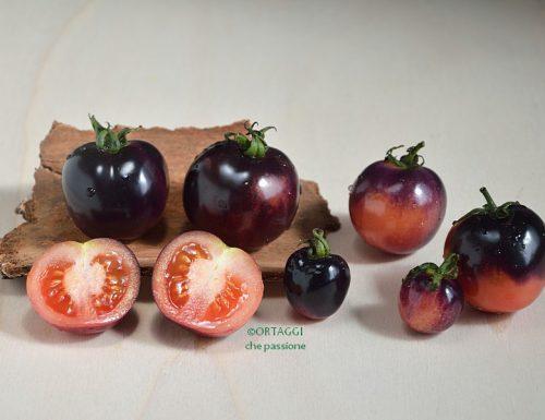 Pomodoro blu – nero di Crimea