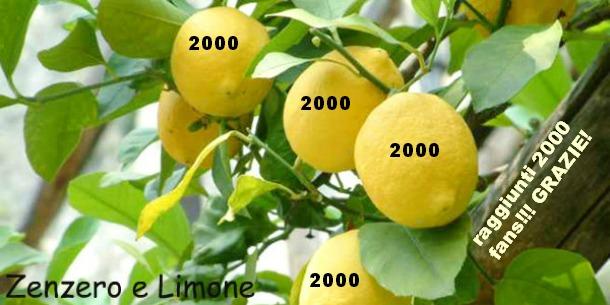 Zenzero e Limone 2000 FANS