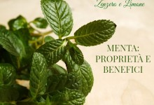 Menta: proprietà e benefici