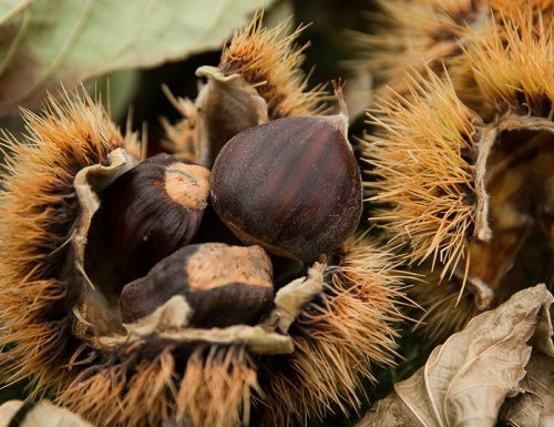 Le castagne, grandi protagonisti d'autunno!
