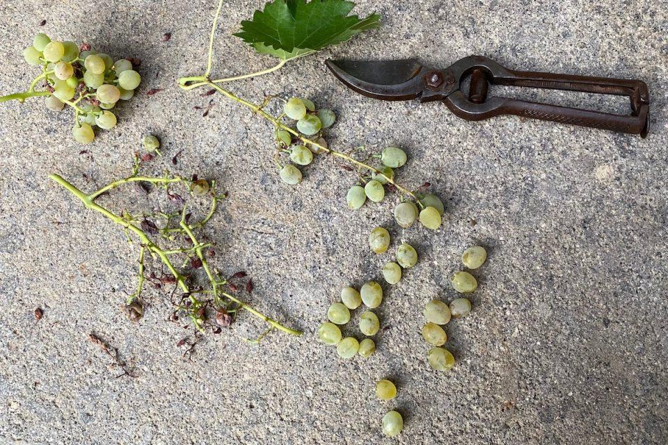 Salsicce con l'uva