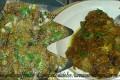 tunnina ammarinata con cipollata alla catanese velocissima