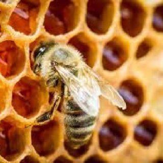 Uso del miele in cucina