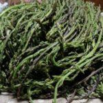 Asparagi selvatici: come conservarli