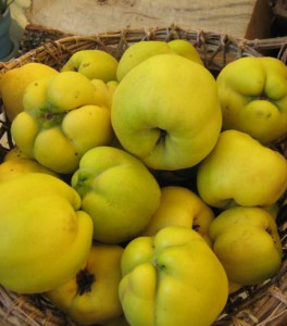 cesto di mele cotogne