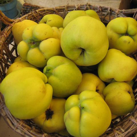 frutti dimenticati: mela cotogna - frutti