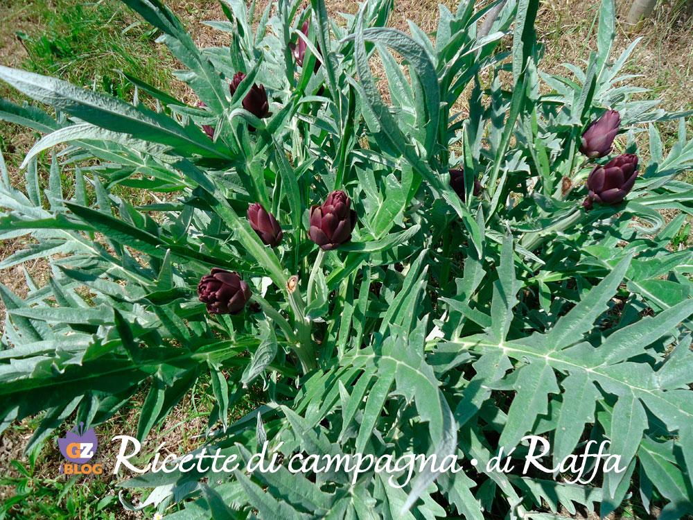 pianta_carciofi