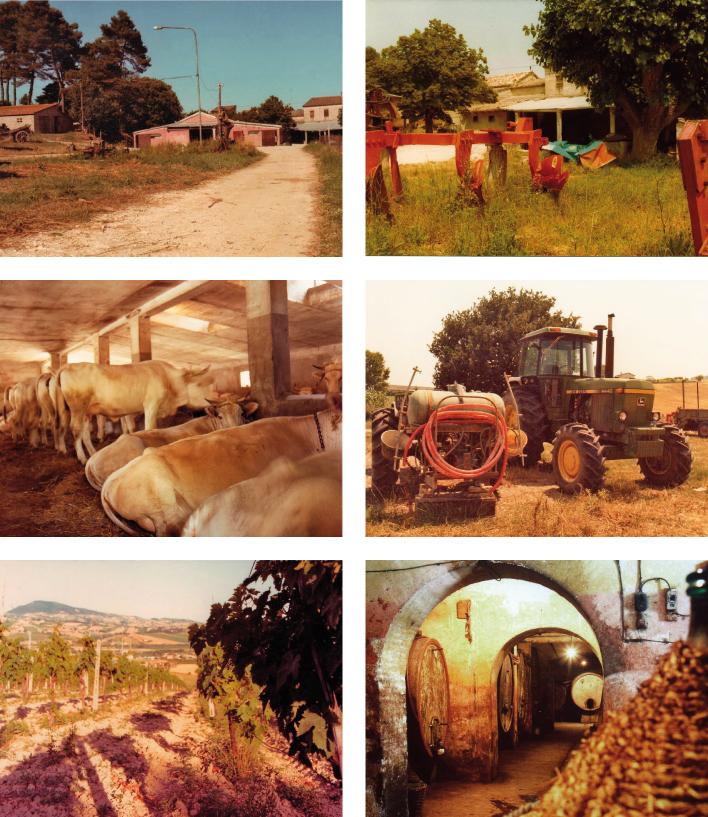 Villa Favorita story ora sede ISTAO ex Villa Ricotti - azienda agricola