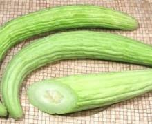 Il Tortarello, il melone che si mangia come un cetriolo