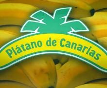 La banana canaria, unica al mondo