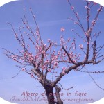 albero pescomrf2014